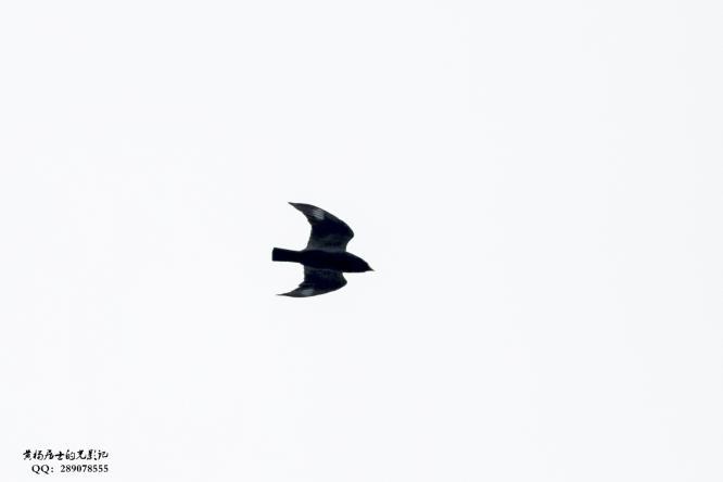 图说 省常中观鸟小记之2020.05.31