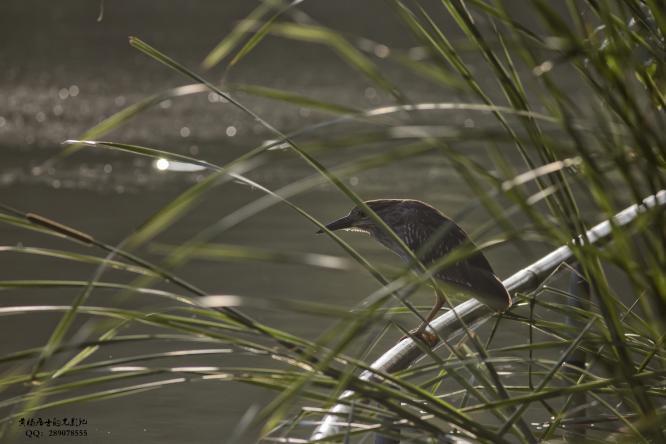 图说 省常中观鸟小记之2020.06.07